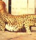 khnopff art or the sphinx or the caresses