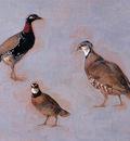 Knip Ronner Henrietta Three fowls Sun