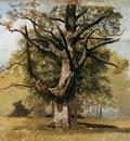 Koekkoek Barend C Beech tree Sun