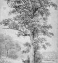 Koekkoek Barend C Oak Sun