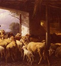 Mali Christian Friedrich Feeding The Sheep
