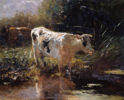 Maris Willem Cow at the edge of the water Sun