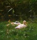 Maris Willem Ducks Sun