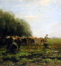 Maris Willem Milking bend Sun