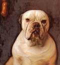 Matsch Franz von A Bulldog