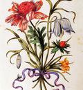Merian Maria Sibylla Flower Sun