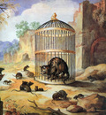 Mindt Godfried Cat in a cage Sun