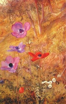 newman anemones