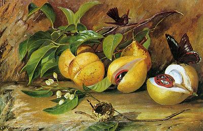 North Marianne Flowers fruit of Nutmeg tree Sun
