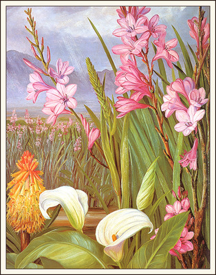 bs flo Marianne North Beauties Of The Swamps South Africa