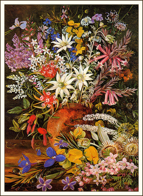 bs flo Marianne North Wildflowers New South Wales