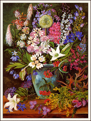 bs flo Marianne North Wildflowers West Australia