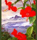 bs flo Marianne North Hibiscus Liliiflorus Seychelles