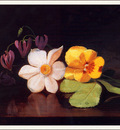 bs flo George W Platt Still Life A Handful Of Flowers
