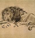 lion, rembrandt 1600x1200 id