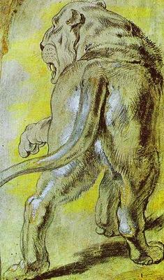 Peter Paul Rubens Lioness