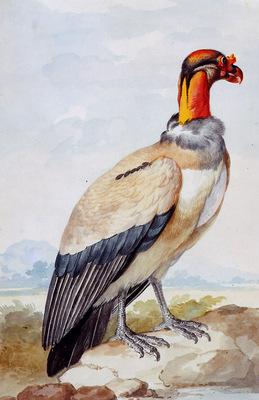 Schouman Aert Condor Sun