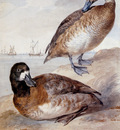 Schouman Aert Pair of ducks Sun