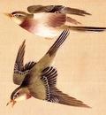 Shuki, Okamoto Bush Warblers end