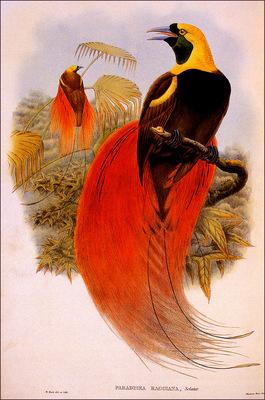 bs na William Hart Count Raggis Bird Of Paradise