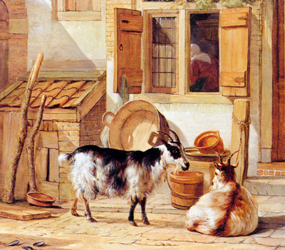 Strij van Abraham Two goats in a yard