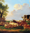 Strij van Jacob Meadow with cattle Sun