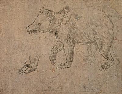 A Bear Walking