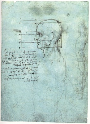 Study of proportions Head Body