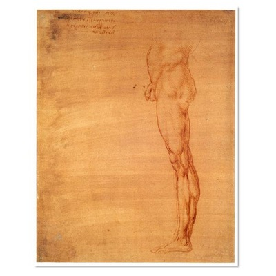 The Abdomen and Leg of a Man