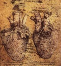 Drawing of the heart and its blood vessels EUR