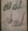estudio de las patas de un lobo