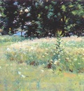 wendel gloucester, field of daisies 1892