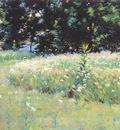 wendel gloucester, field of daisies 1892