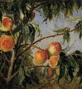 wittredge worthington peaches