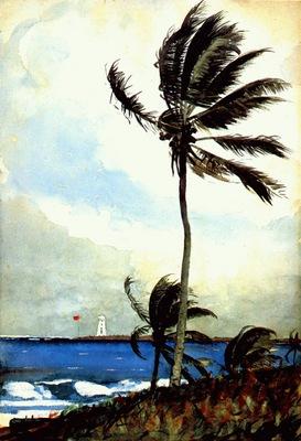 homer palm tree, nassau