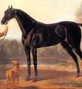 John Wootton The Byerley Turk, De