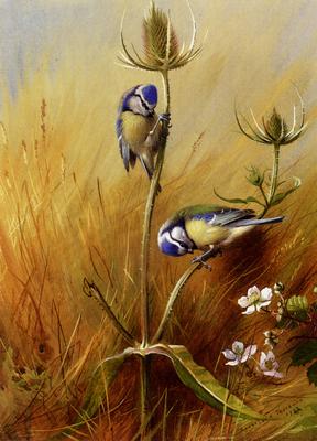 Thorburn Archibald Bluetits On A Teasel