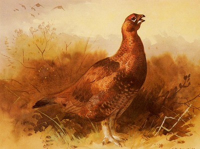 Thorburn Archibald Cock Grouse