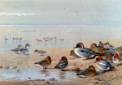 Thornburn Archibald Pintail Teal And Wigeon On The Seashore