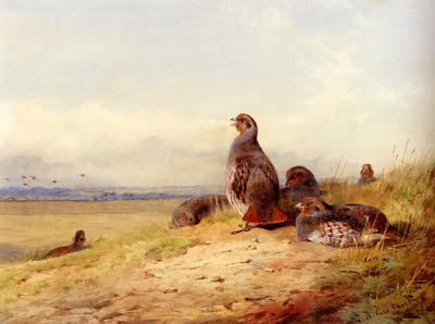 Thornburn Archibald Red Partridges