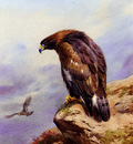Thornburn Archibald A Golden Eagle