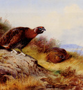 Thornburn Archibald Red Grouse On The Moor