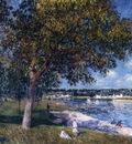 Walnut Tree in a Thomery Field