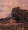 Walnut Trees Sunset   Early Days of October