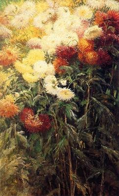 chrysanthemums garden at petit gennevilliers