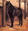 Yerres Dark Bay Horse in the Stable