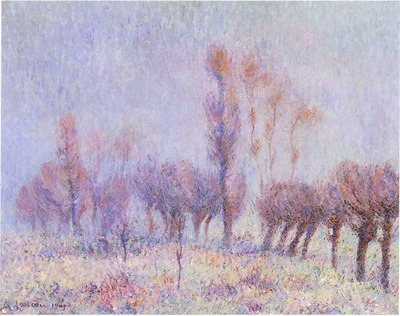 willows in fog