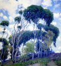 laguna eucalyptus