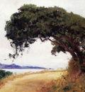 Point Lobos Oak Tree