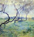 Tamarisk Trees in Early Sunlight